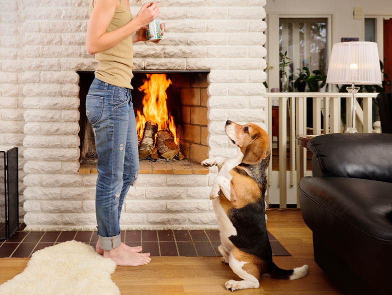 Hound dog sitting upright and begging for treats from woman in front of fireplace