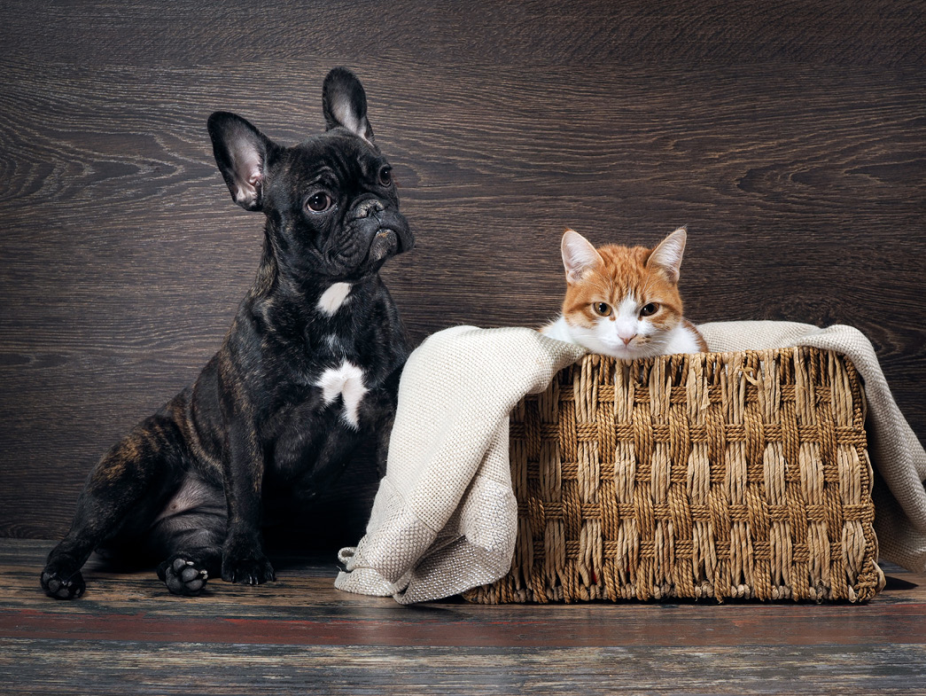 Dog sitting next to cat in a basket