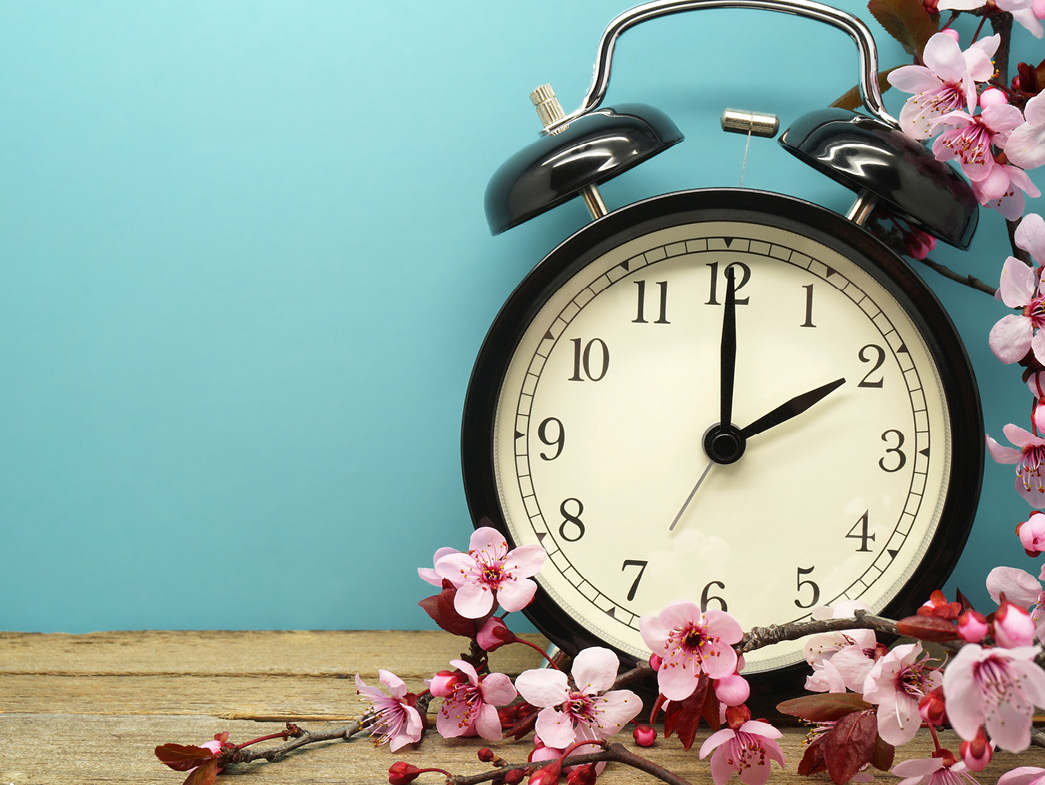 Alarm clock beside pink flowers against blue wall