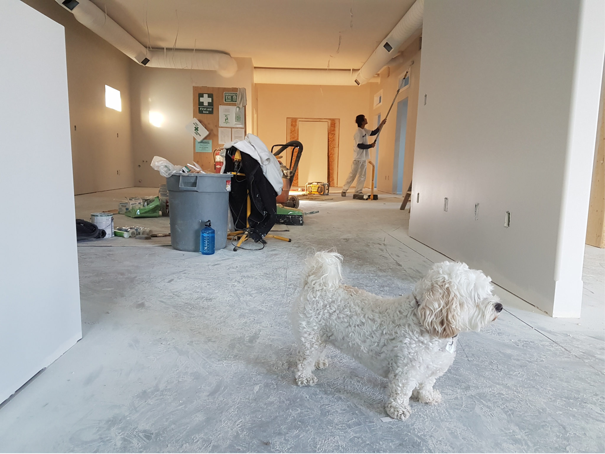 room with white walls and carpet and dog